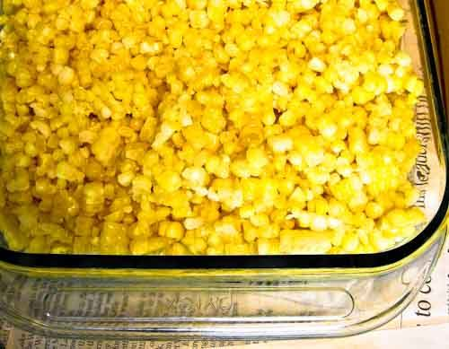 Best quality Indiana sweetcorn prepared and ready for freezing